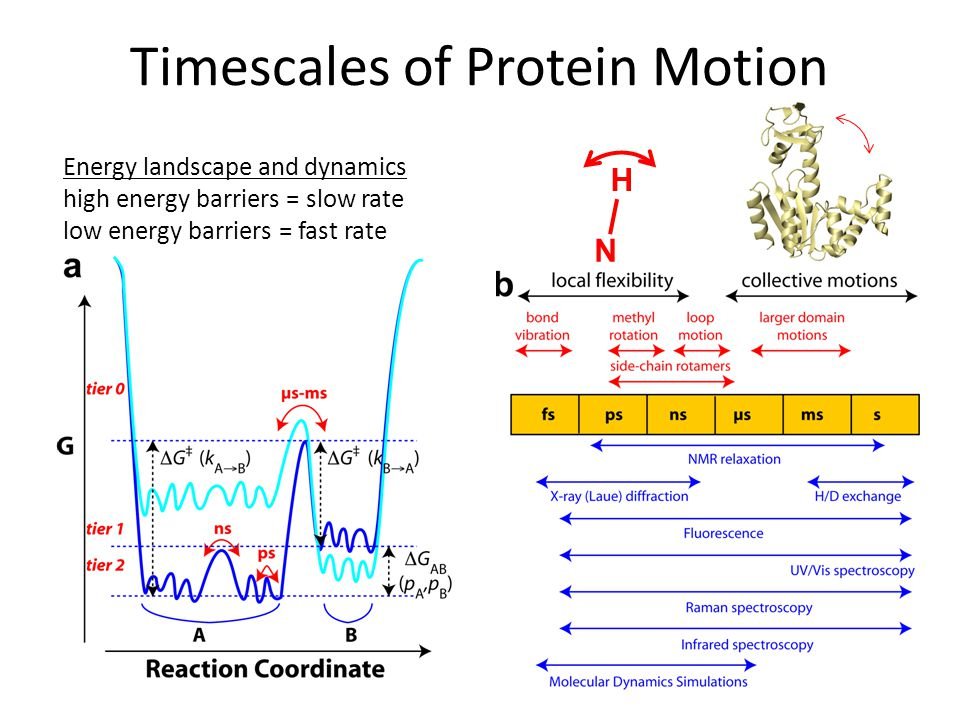 Timescales of Protein Motion
