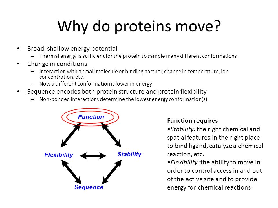 Why do proteins move Broad, shallow energy potential