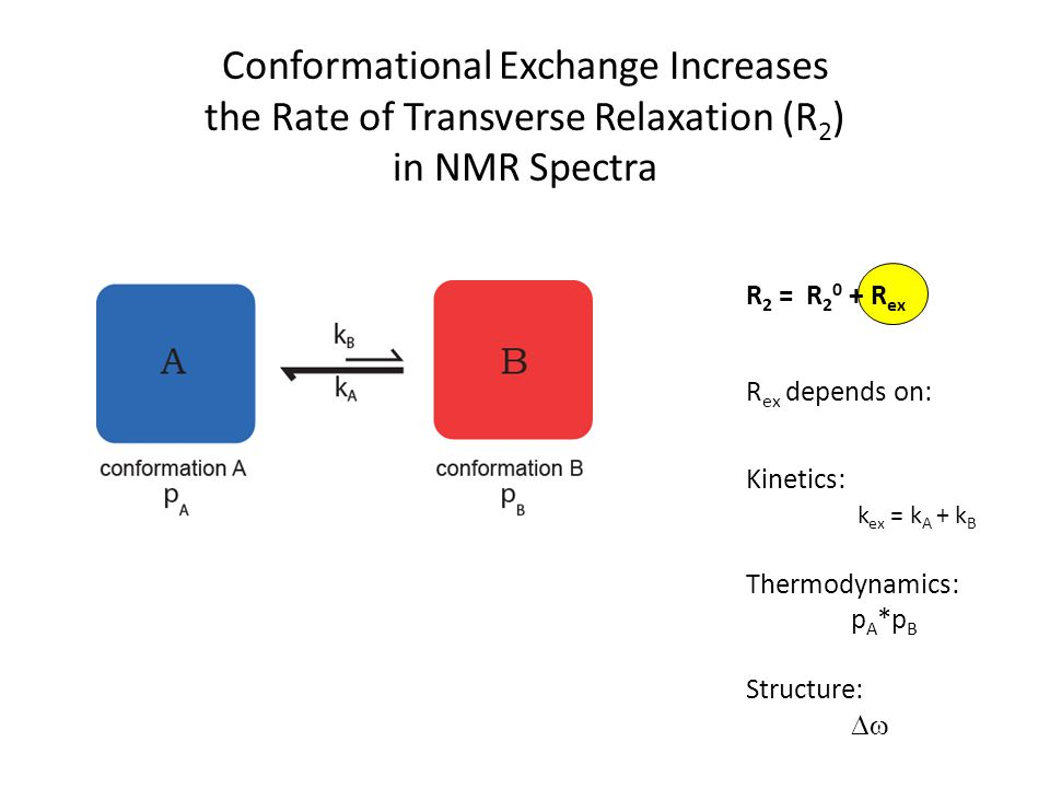 Conformational Exchange Increases the Rate of Transverse Relaxation (R2) in NMR Spectra