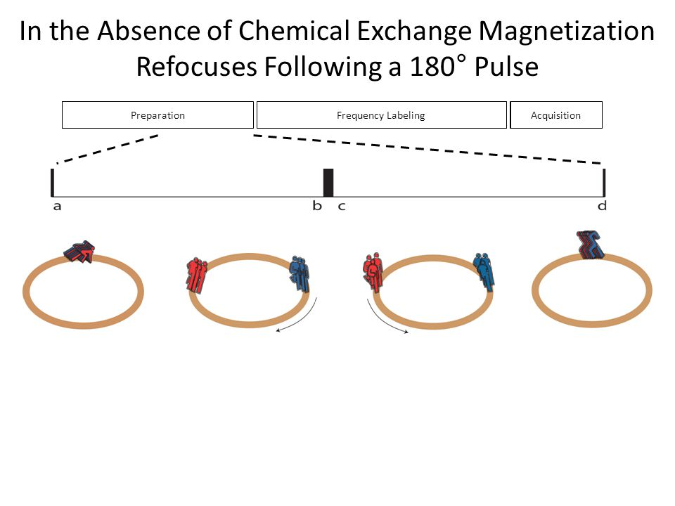 In the Absence of Chemical Exchange Magnetization Refocuses Following a 180° Pulse
