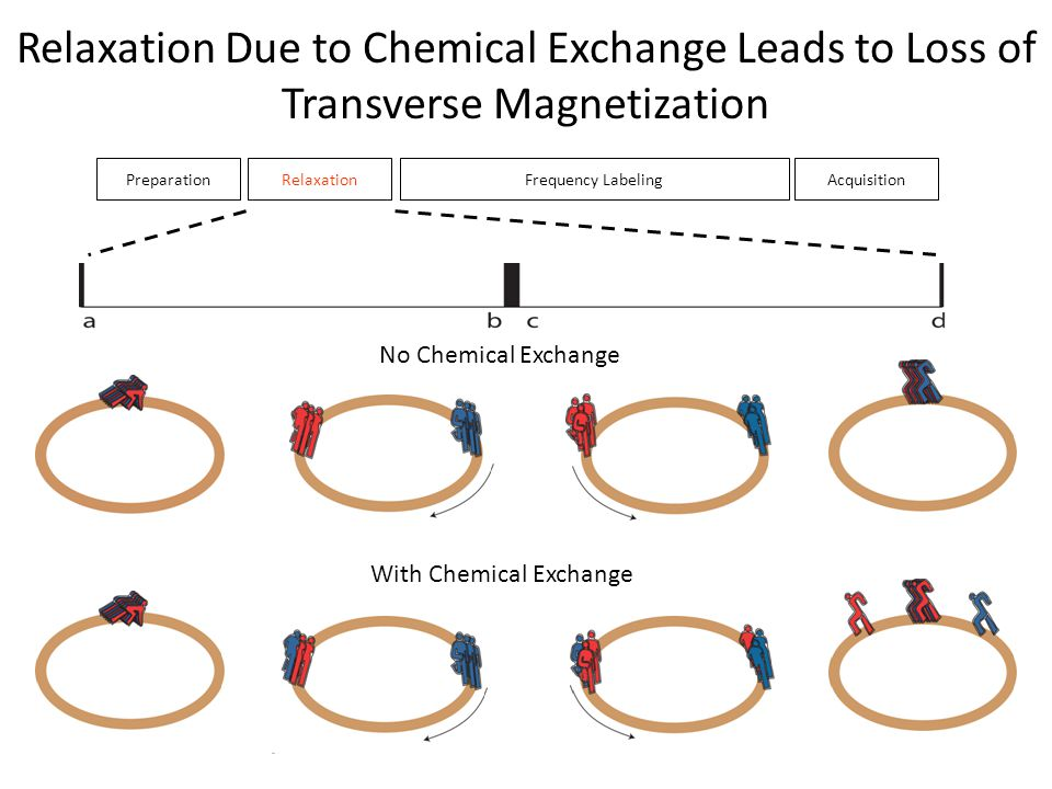 Relaxation Due to Chemical Exchange Leads to Loss of Transverse Magnetization