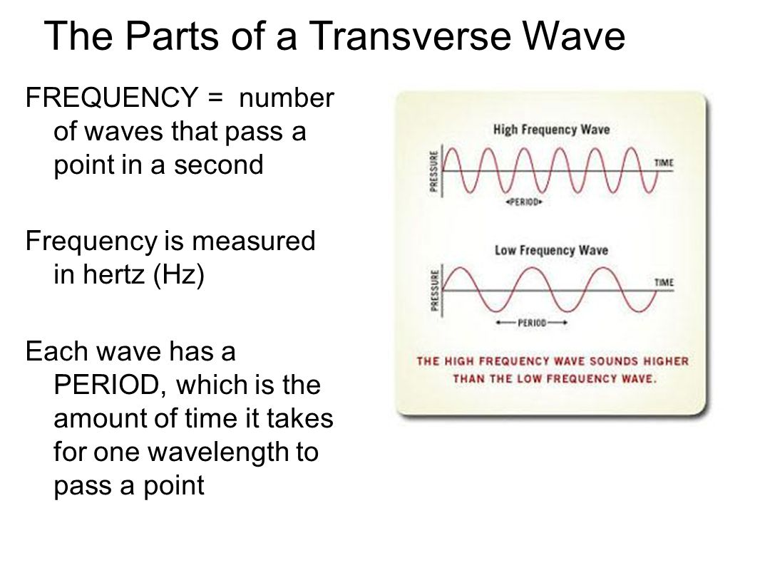 The Parts of a Transverse Wave