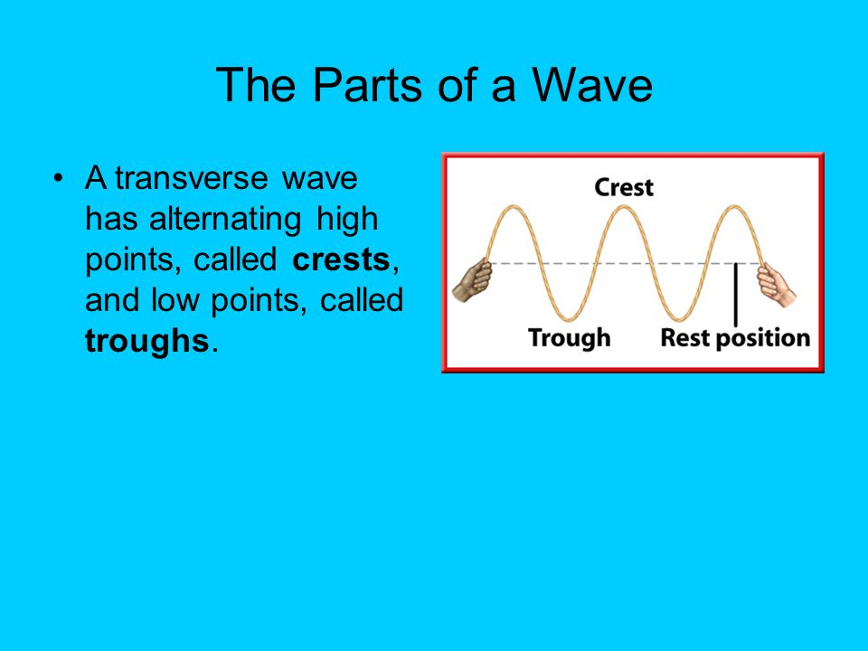 The Parts of a Wave A transverse wave has alternating high points, called crests, and low points, called troughs.