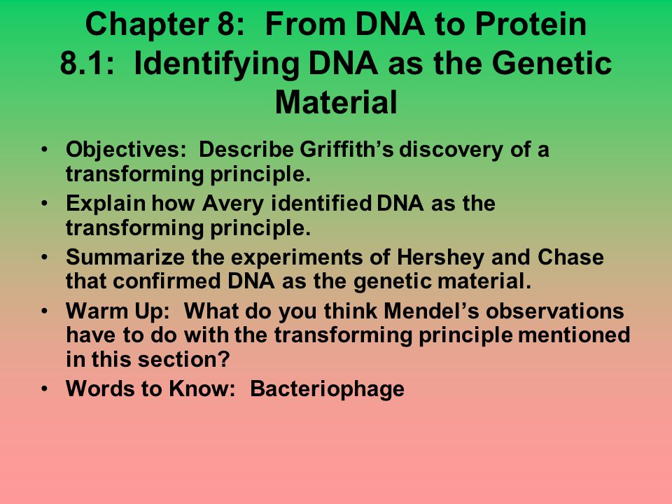 Chapter 8: From DNA to Protein 8