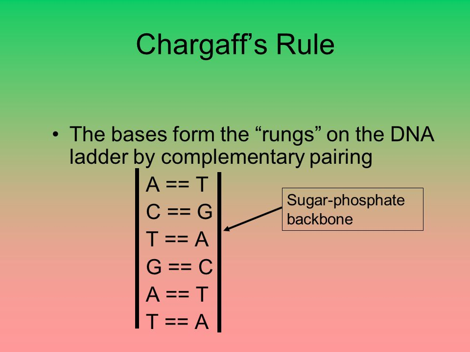 Chargaff's Rule The bases form the rungs on the DNA ladder by complementary pairing. A == T. C == G.