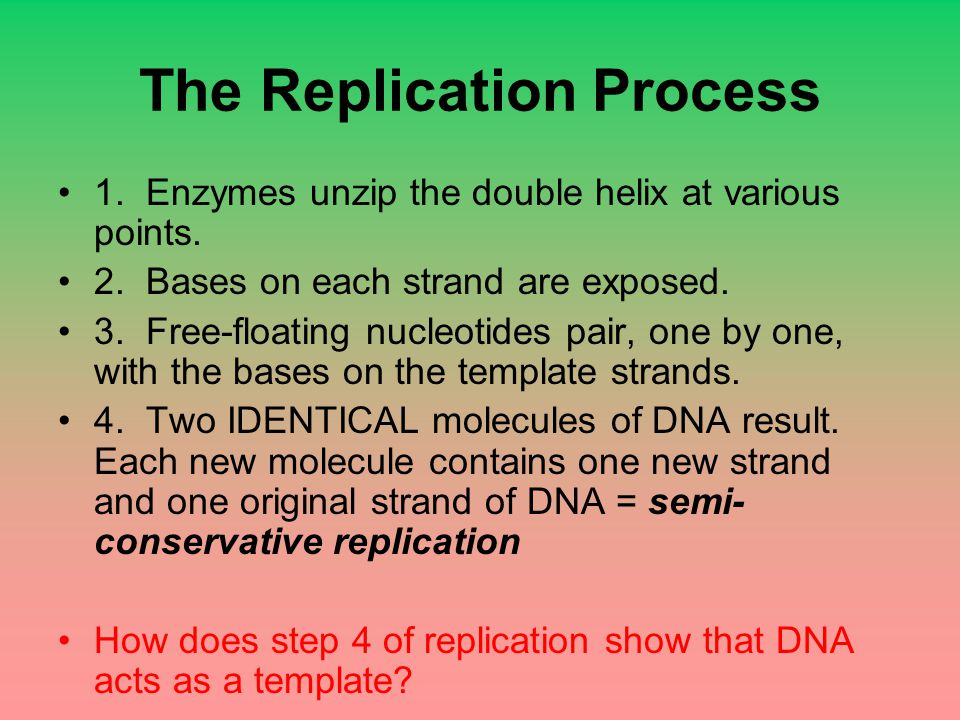 The Replication Process