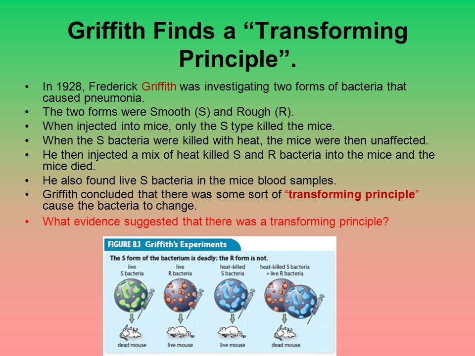 Griffith Finds a Transforming Principle .