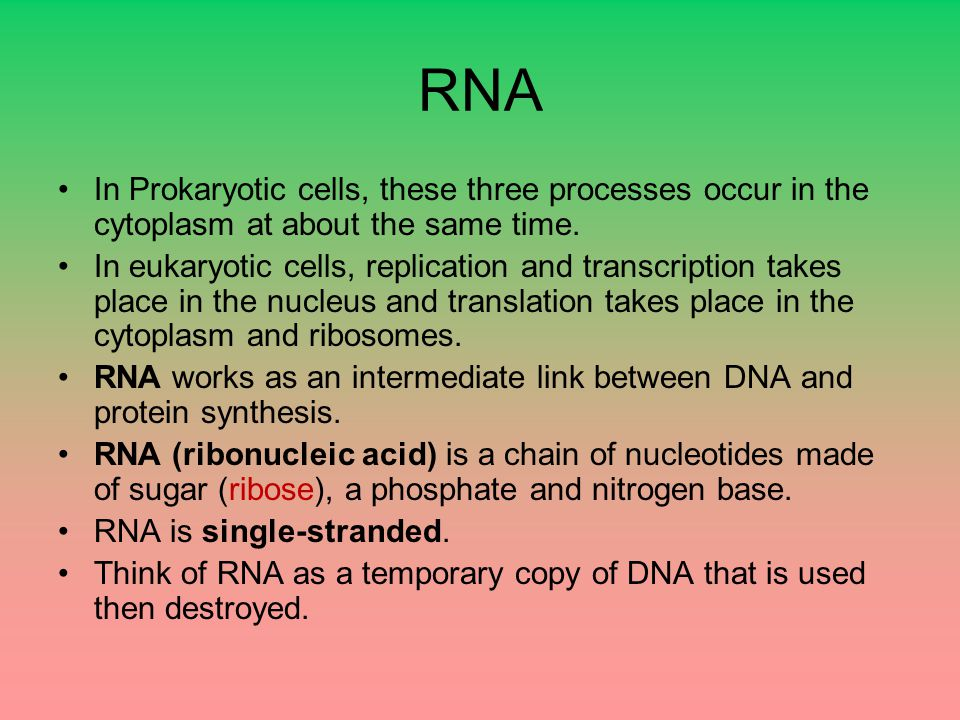 RNA In Prokaryotic cells, these three processes occur in the cytoplasm at about the same time.