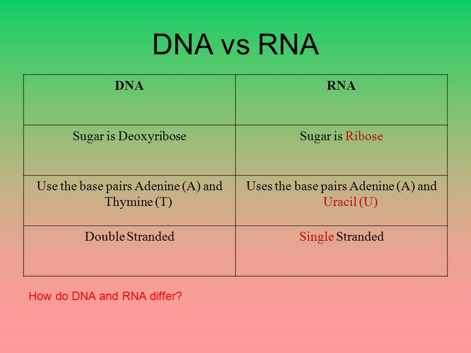 DNA vs RNA DNA RNA Sugar is Deoxyribose Sugar is Ribose