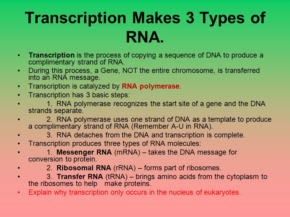 Transcription Makes 3 Types of RNA.