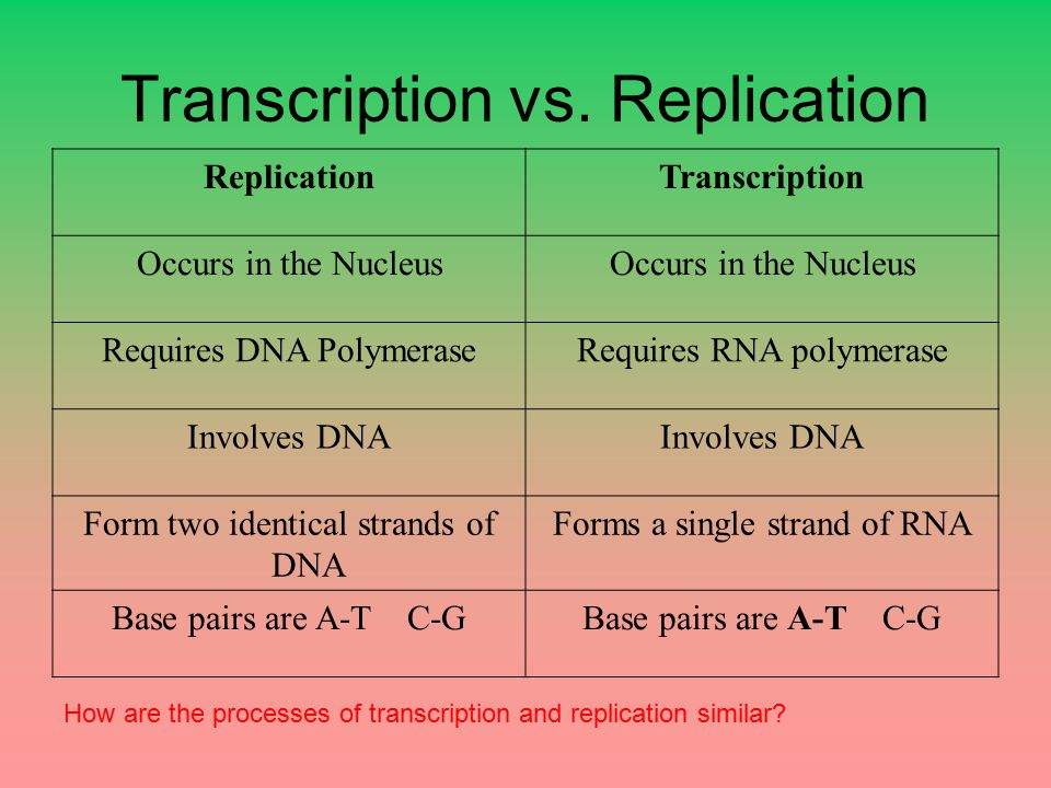 Transcription vs. Replication