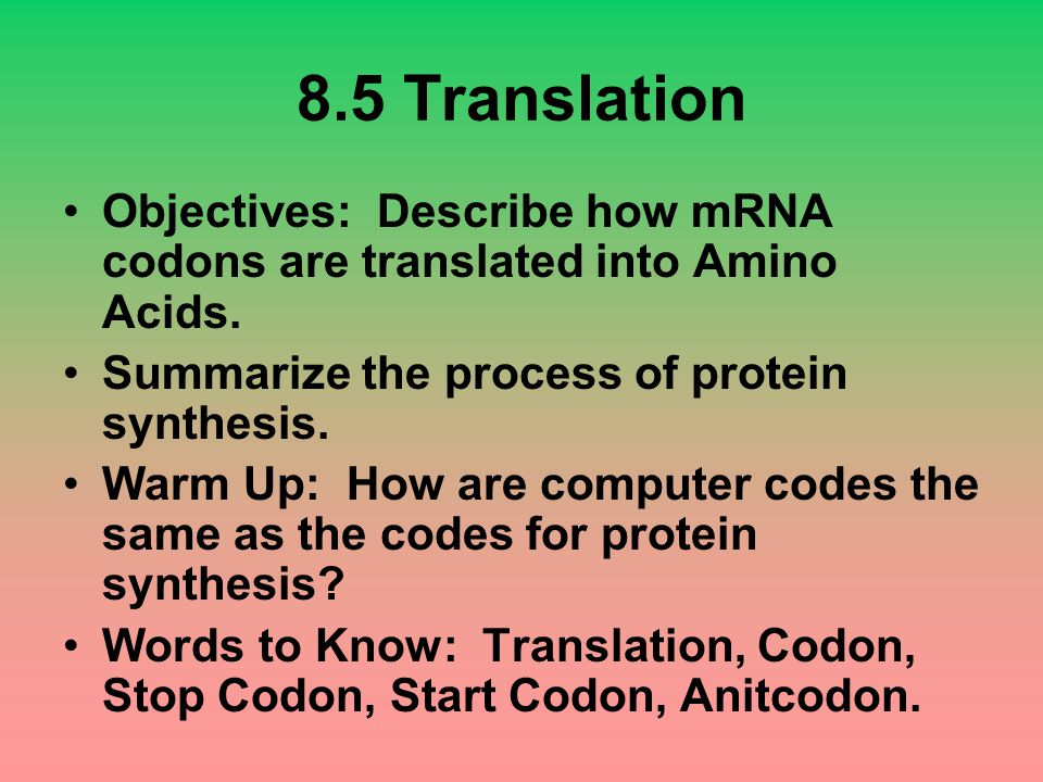 8.5 Translation Objectives: Describe how mRNA codons are translated into Amino Acids. Summarize the process of protein synthesis.