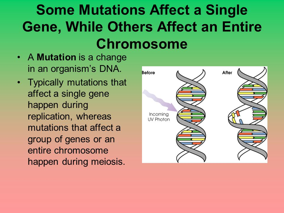 Some Mutations Affect a Single Gene, While Others Affect an Entire Chromosome