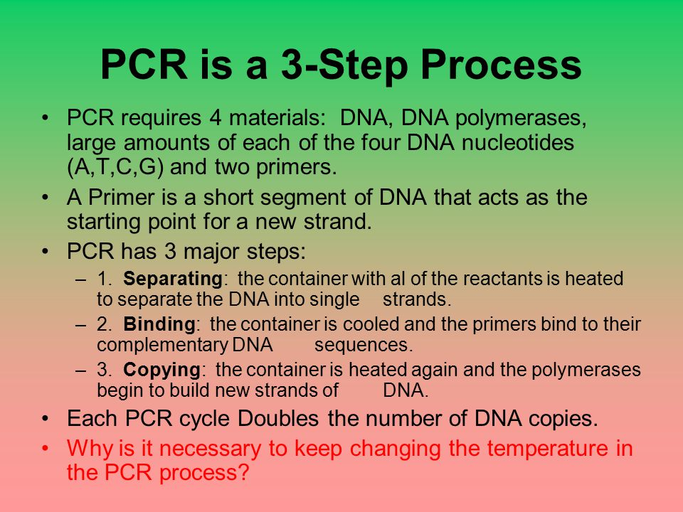 PCR is a 3-Step Process PCR requires 4 materials: DNA, DNA polymerases, large amounts of each of the four DNA nucleotides (A,T,C,G) and two primers.