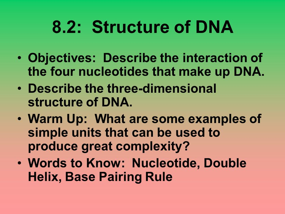 8.2: Structure of DNA Objectives: Describe the interaction of the four nucleotides that make up DNA.