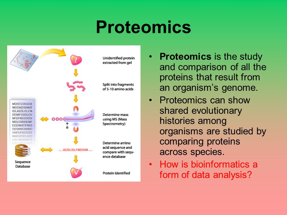 Proteomics Proteomics is the study and comparison of all the proteins that result from an organism's genome.