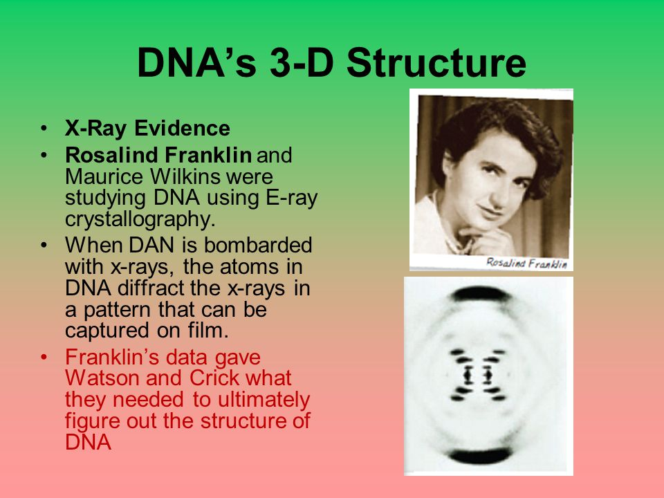 DNA's 3-D Structure X-Ray Evidence