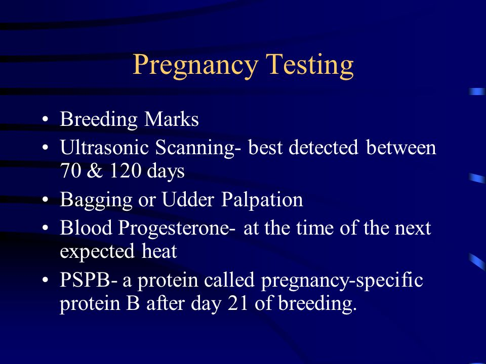 Pregnancy Testing Breeding Marks