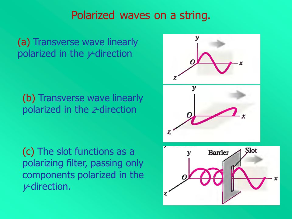 Polarized waves on a string.