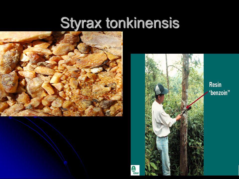 Styrax tonkinensis