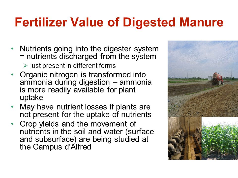 Fertilizer Value of Digested Manure