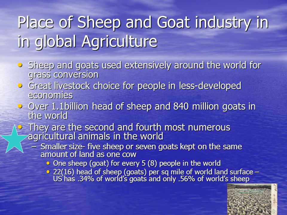 Place of Sheep and Goat industry in in global Agriculture