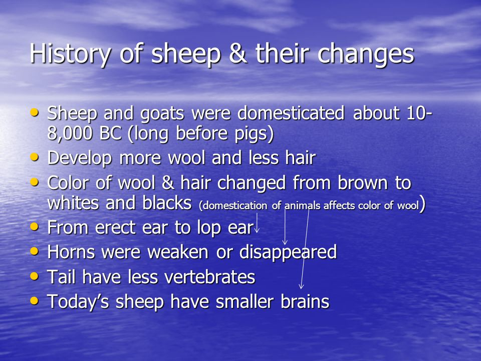 History of sheep & their changes