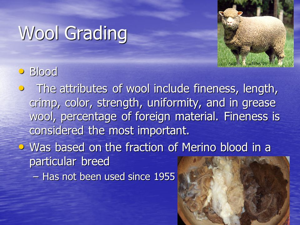 Wool Grading Blood.