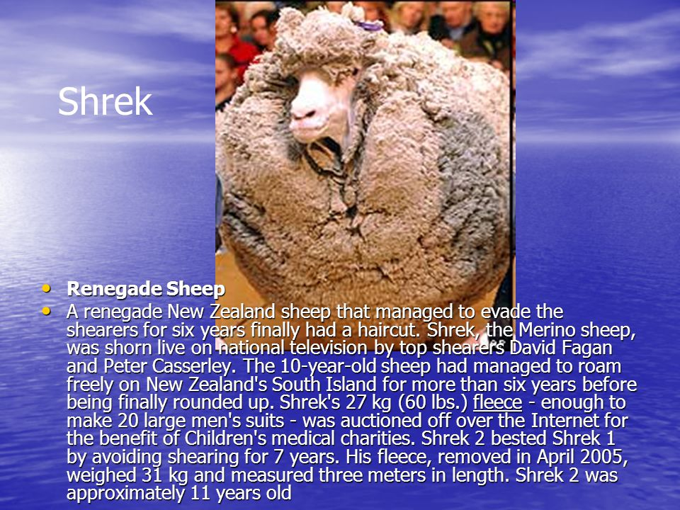 Shrek Renegade Sheep