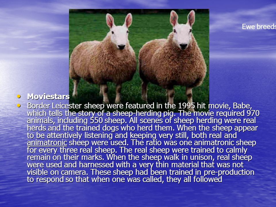 Ewe breeds Moviestars
