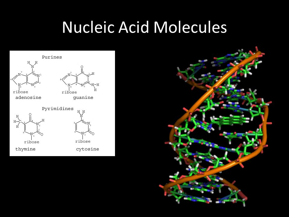 Macromolecules For Identification - ppt download