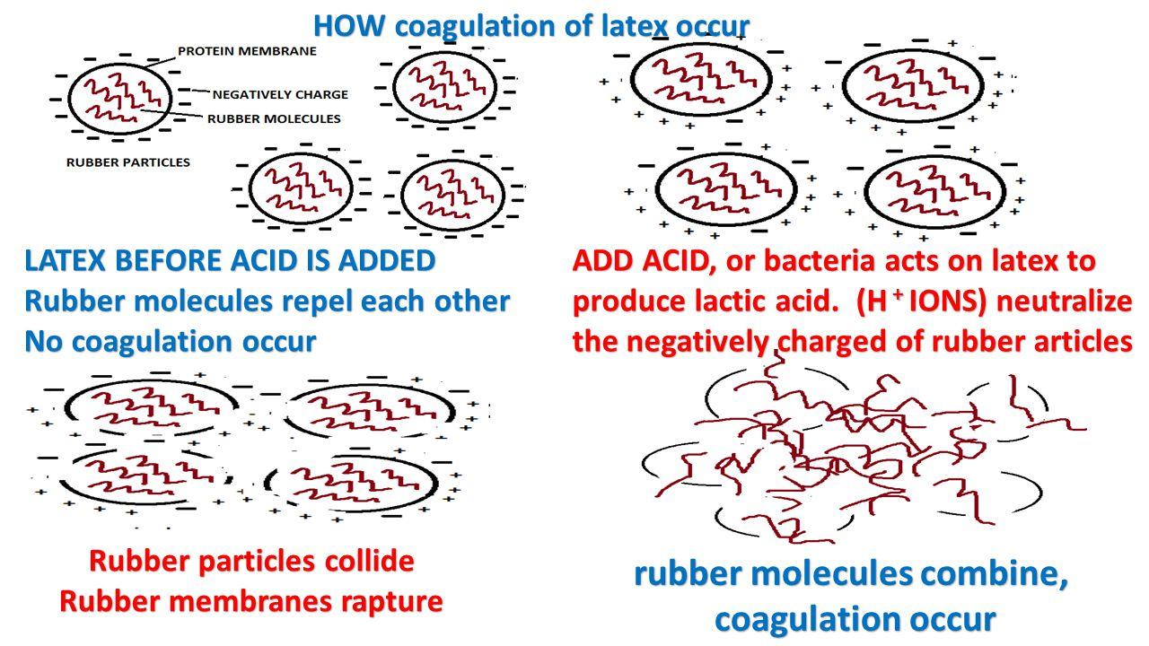 rubber molecules combine, coagulation occur