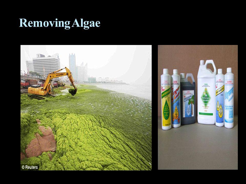 Removing Algae