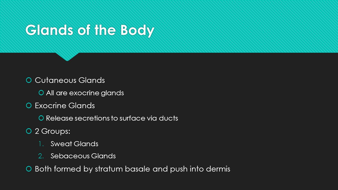 Glands of the Body Cutaneous Glands Exocrine Glands 2 Groups: