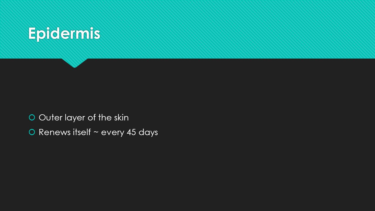Epidermis Outer layer of the skin Renews itself ~ every 45 days
