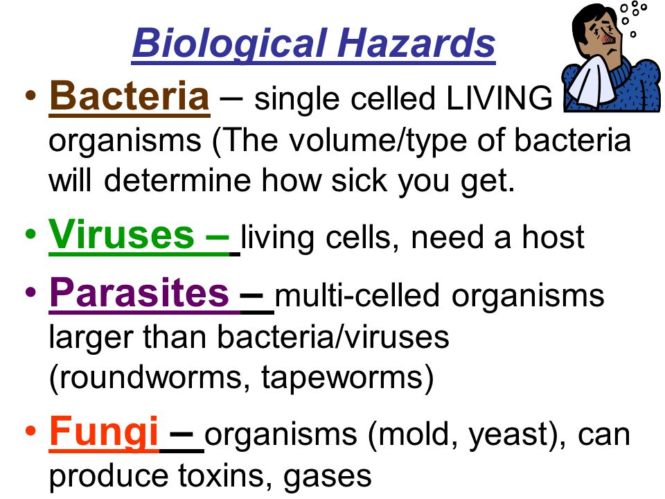 Biological Hazards Bacteria – single celled LIVING organisms (The volume/type of bacteria will determine how sick you get.