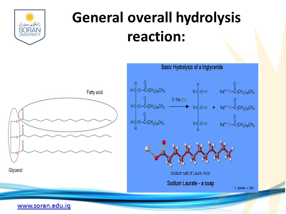 General overall hydrolysis reaction: