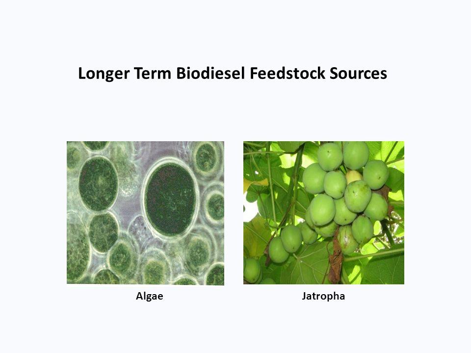 Longer Term Biodiesel Feedstock Sources