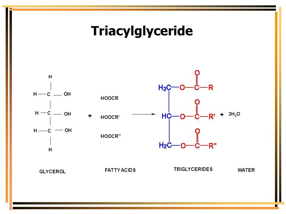 Triacylglyceride + C H OH HOOCR HOOCR' HOOCR 3H O GLYCEROL