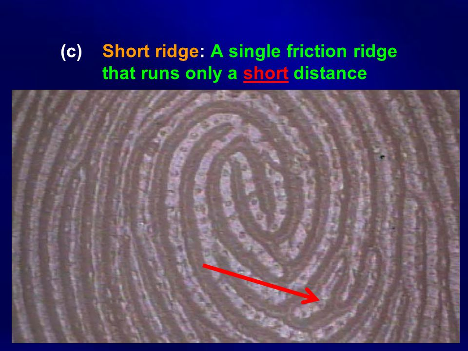 (c). Short ridge: A single friction ridge