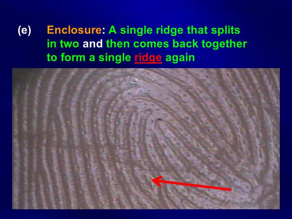 (e). Enclosure: A single ridge that splits
