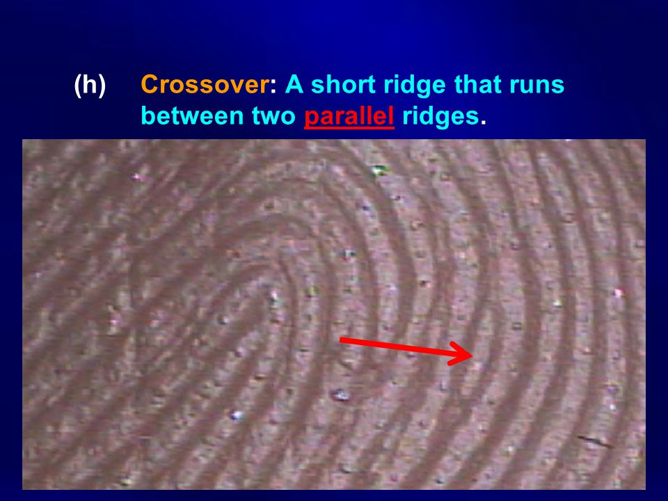 (h) Crossover: A short ridge that runs between two parallel ridges.