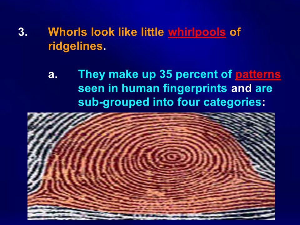 3. Whorls look like little whirlpools of. ridgelines. a
