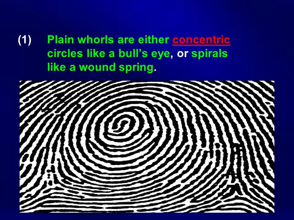 (1). Plain whorls are either concentric