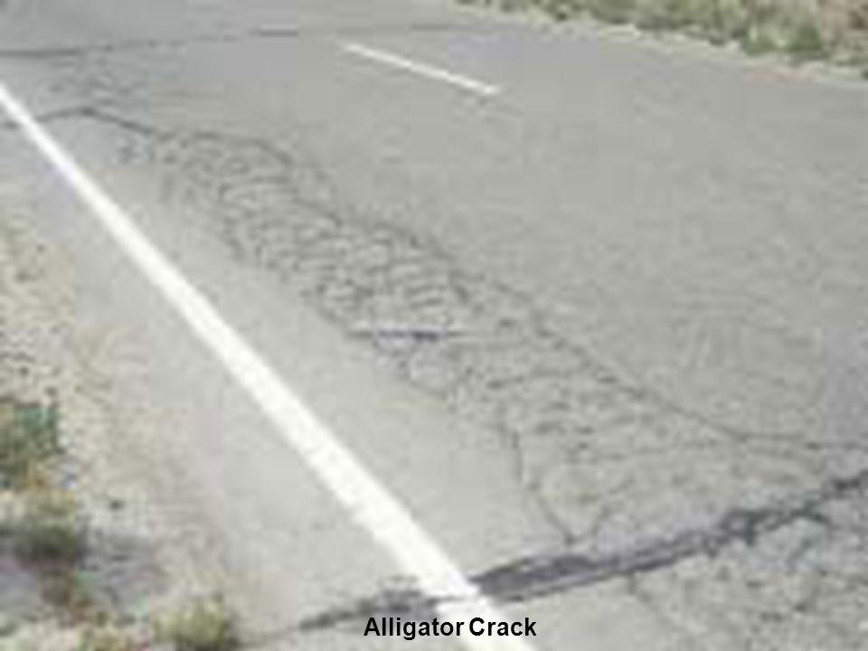 Alligator Crack
