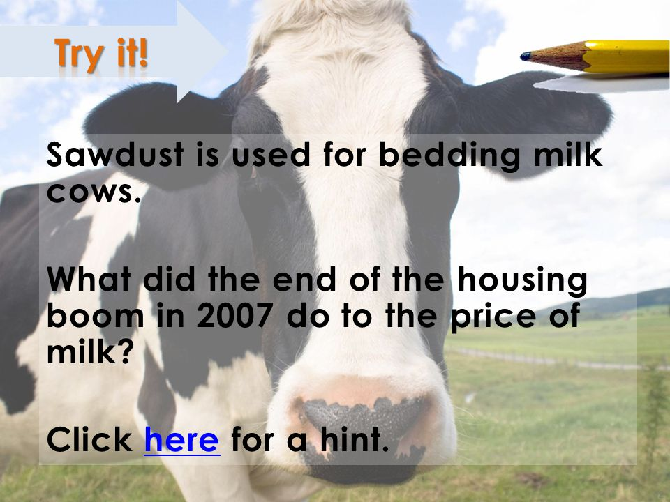 ; Sawdust is used for bedding milk cows.