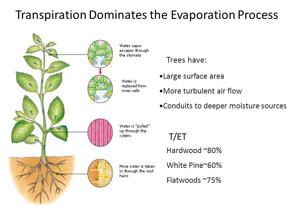 Transpiration Dominates the Evaporation Process