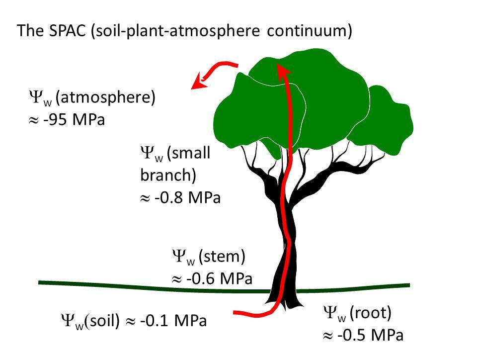 The SPAC (soil-plant-atmosphere continuum)