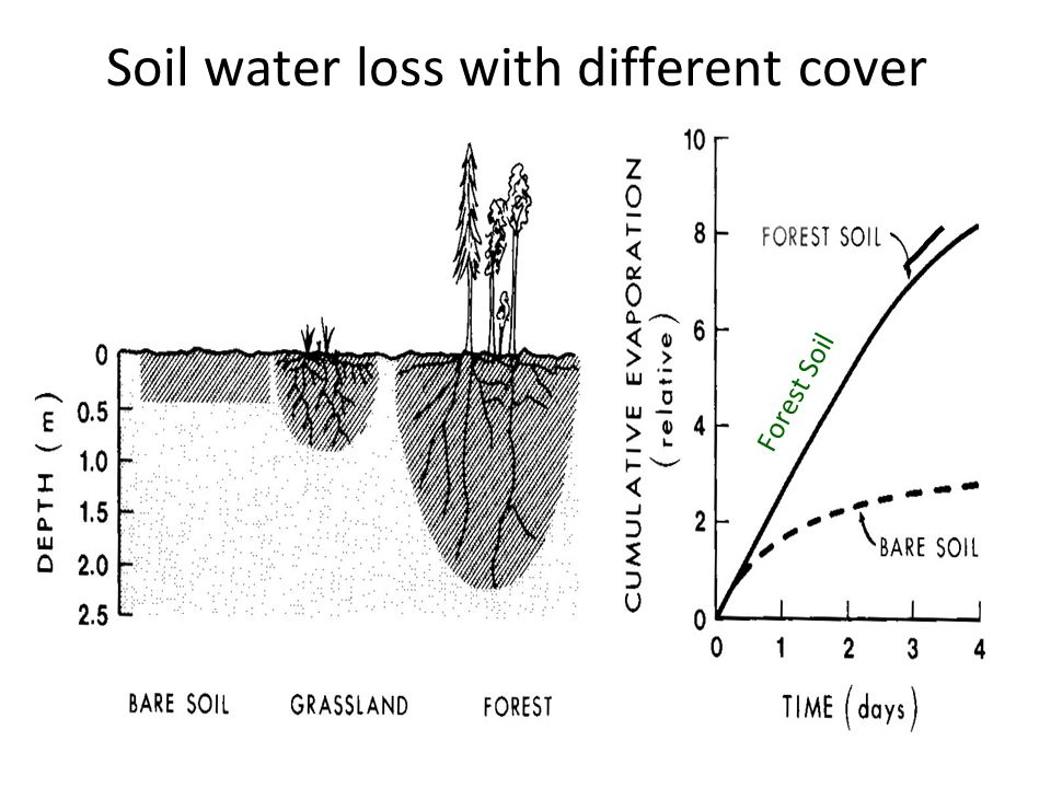 Soil water loss with different cover