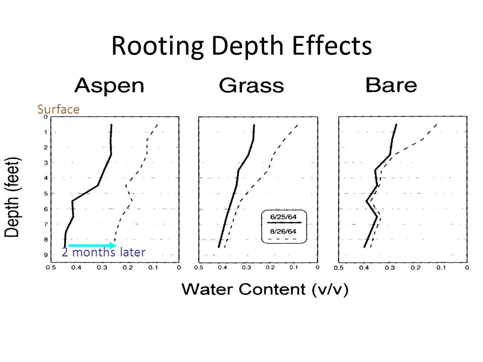 Rooting Depth Effects Surface 2 months later